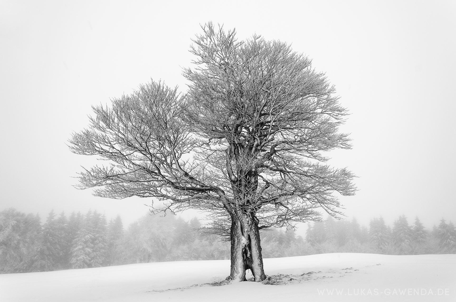 Winterbilder Schauinsland Freiburg Fotos